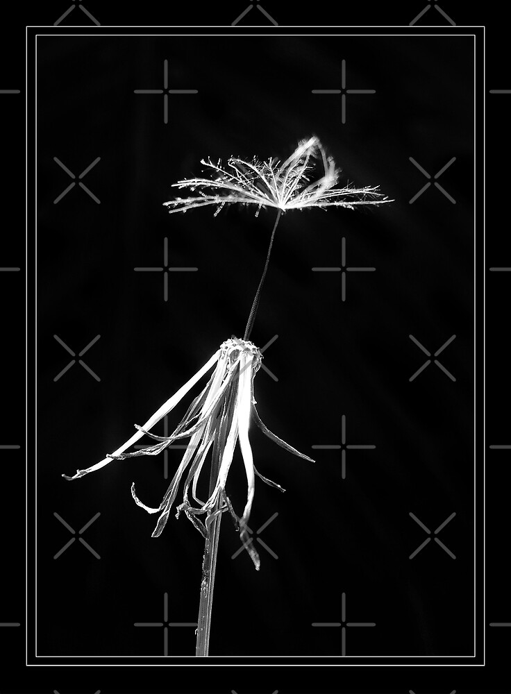 Sole survivor by R-evolution GFX