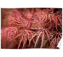 Firey Oriental Maple Tree Poster
