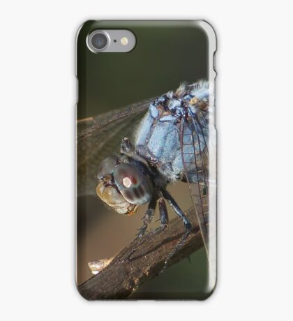 Blue Skimmer Portrait iPhone Case/Skin