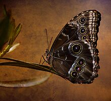 """""""If nothing ever changed, there'd be no butterflies"""" by VLFatum"""