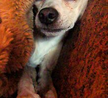 Lil' Bit And His Blankie #3...Just Trying To Be A Happy Guy by Susan Bergstrom