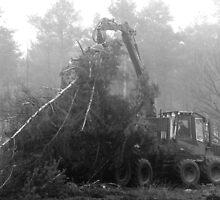 Deforestation by steppeland