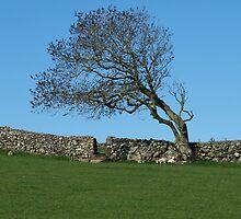 Inishowen Flora - Windswept Tree by jecate