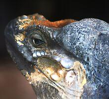 Monitor Lizard by Wayne Gerard Trotman