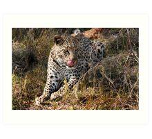 She's so sneaky - Female leopard, Okavango Delta Art Print