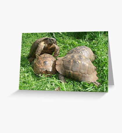 Bullied into Submission - Mating Tortoises Greeting Card