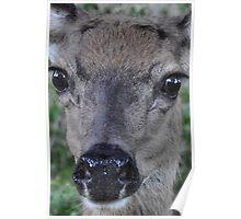 Eyes of a deer: face-to-deer face 2 Poster
