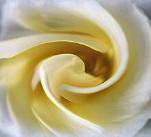 Swirled Rose by imagesbyjd