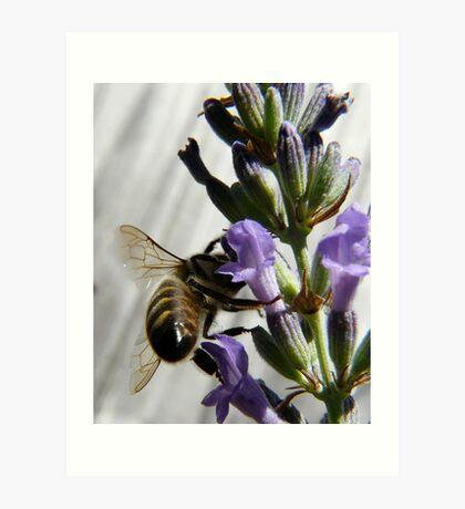 bee wings Art Print