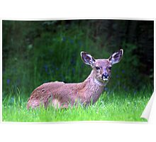 Doe on the Lawn Poster