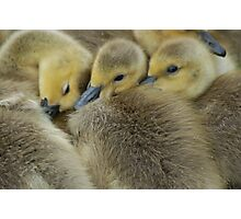 Snuggle Ducks Photographic Print