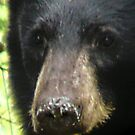 Black Bear's face by MaeBelle