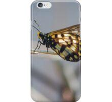 Glasswing Butterfly iPhone Case/Skin