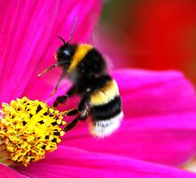 The Mystery Of A Bumblebee's Flight by Wayne Gerard Trotman