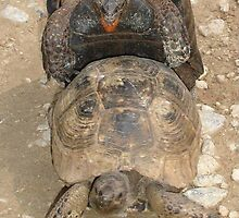 Enjoy Every Moment Tortoise Humour by taiche