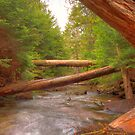 hdr fallen trees over creek at dickson falls by Jamie Roach
