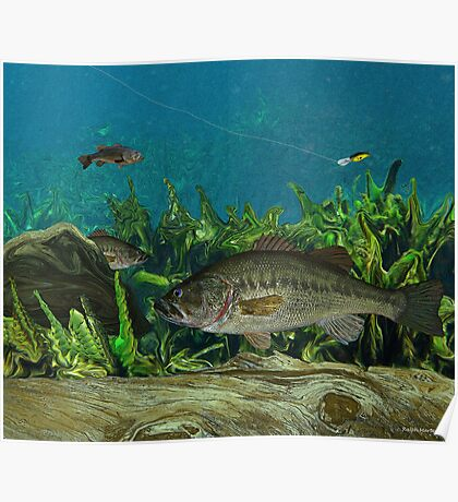 Largemouth Bass Poster