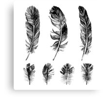 hand drawn feathers design Canvas Print