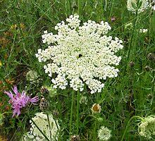Columbia/Kooteney Wildflowers by Gregory Ewanowich