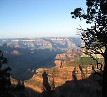 North Rim Morning Light by DawnJM