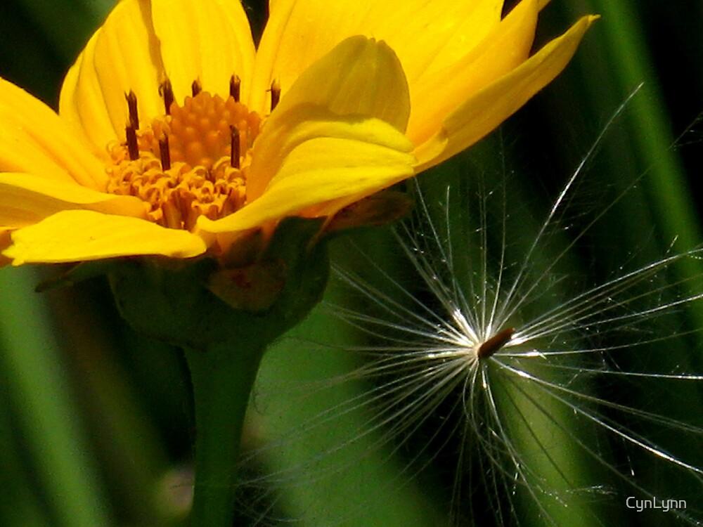 Catching Seeds by CynLynn