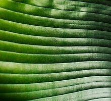 banana leaf by moken78