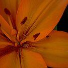 Lily by Jenebraska