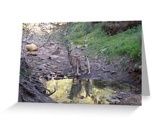 Reflections! Early morning at water hole. Greeting Card