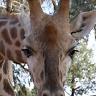 'IS MY MASCARRA RUNNING!', yours is! Giraffe. by Rita Blom