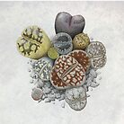 Lithops Cluster (No Labels) by NearBird