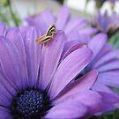 Jiminy Cricket by heathernicole00