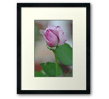 Pinky Framed Print