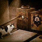 Cat on tombstone by Igor Giamoniano