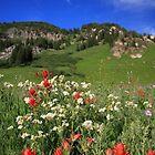 Albion Basin Wildflowers by Gene Praag