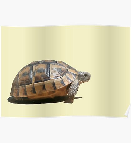 Sideview of A Walking Turkish Tortoise Isolated Poster