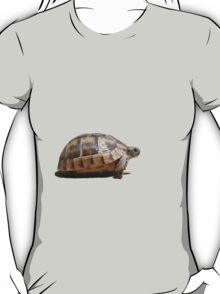 Sideview of A Walking Turkish Tortoise Isolated T-Shirt