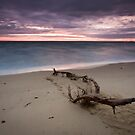 Driftwood by Alistair Wilson