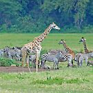 The Garden of Eden - Arusha National Park, Tanzania by Adrian Paul