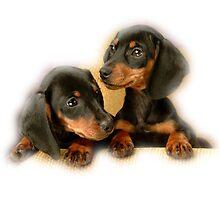 Puppies by Vitalia