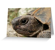 Close Up Side Portrait Of A Turkish Tortoise Greeting Card