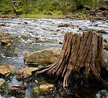 Stumped @ Nigretta Falls by Murray Wills