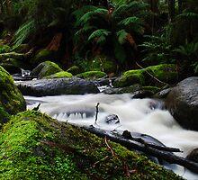 Toorongo River by KeepsakesPhotography Michael Rowley