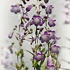 Purple by Catherine Hamilton-Veal  ©