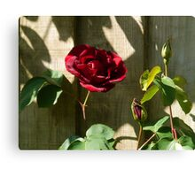 Red Red Rose......... Canvas Print