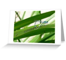Damsel Flies Mating Greeting Card