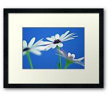 Simple Daisies Framed Print
