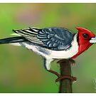 birdie by archys Design