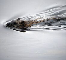 Otter in the lake by Ms-Bexy