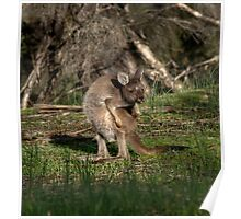 Cheeky Roo! Poster