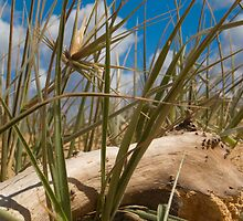 Driftwood and dune grass by angusimages